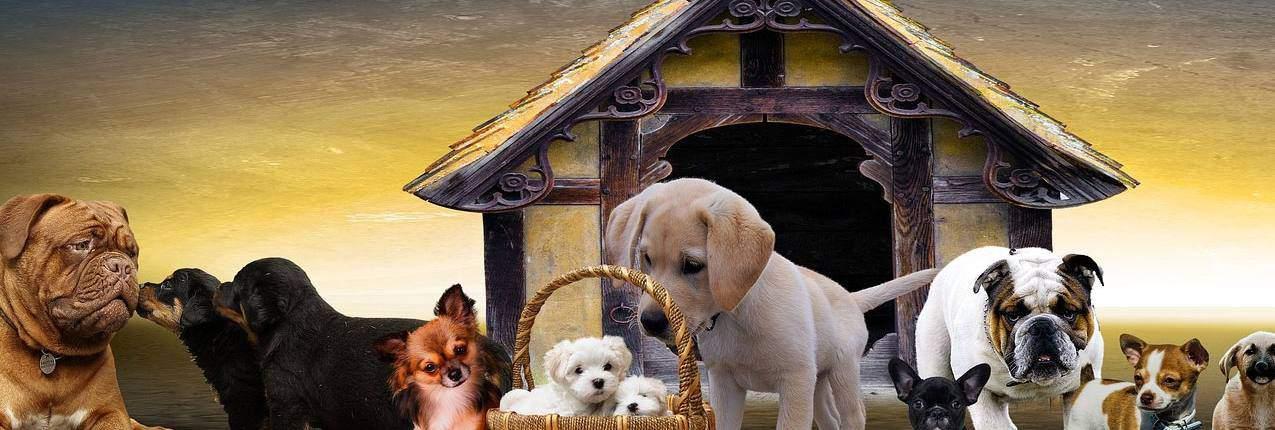 HP Hundefoder - godt hundefoder til alle hunde
