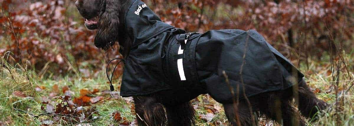 Back On Track hundedækken til alle typer hunde - også Gravhunde