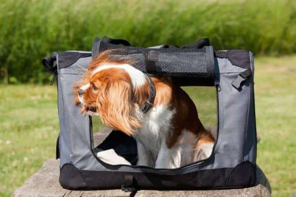 Lasota pet energy halsbånd til små hunde