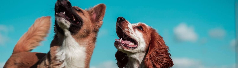 HP Hundefoder - foder til alle hunde
